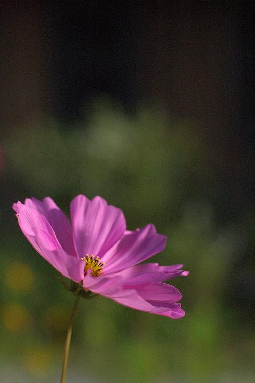30 Wildflower