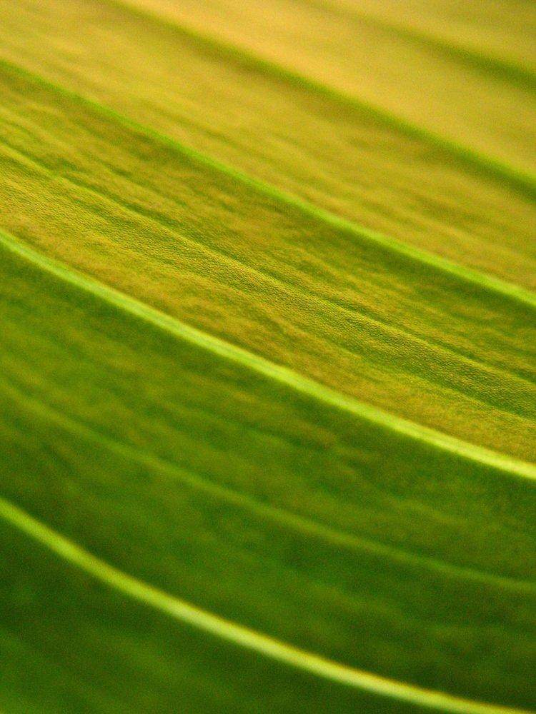 33 Leaf Texture