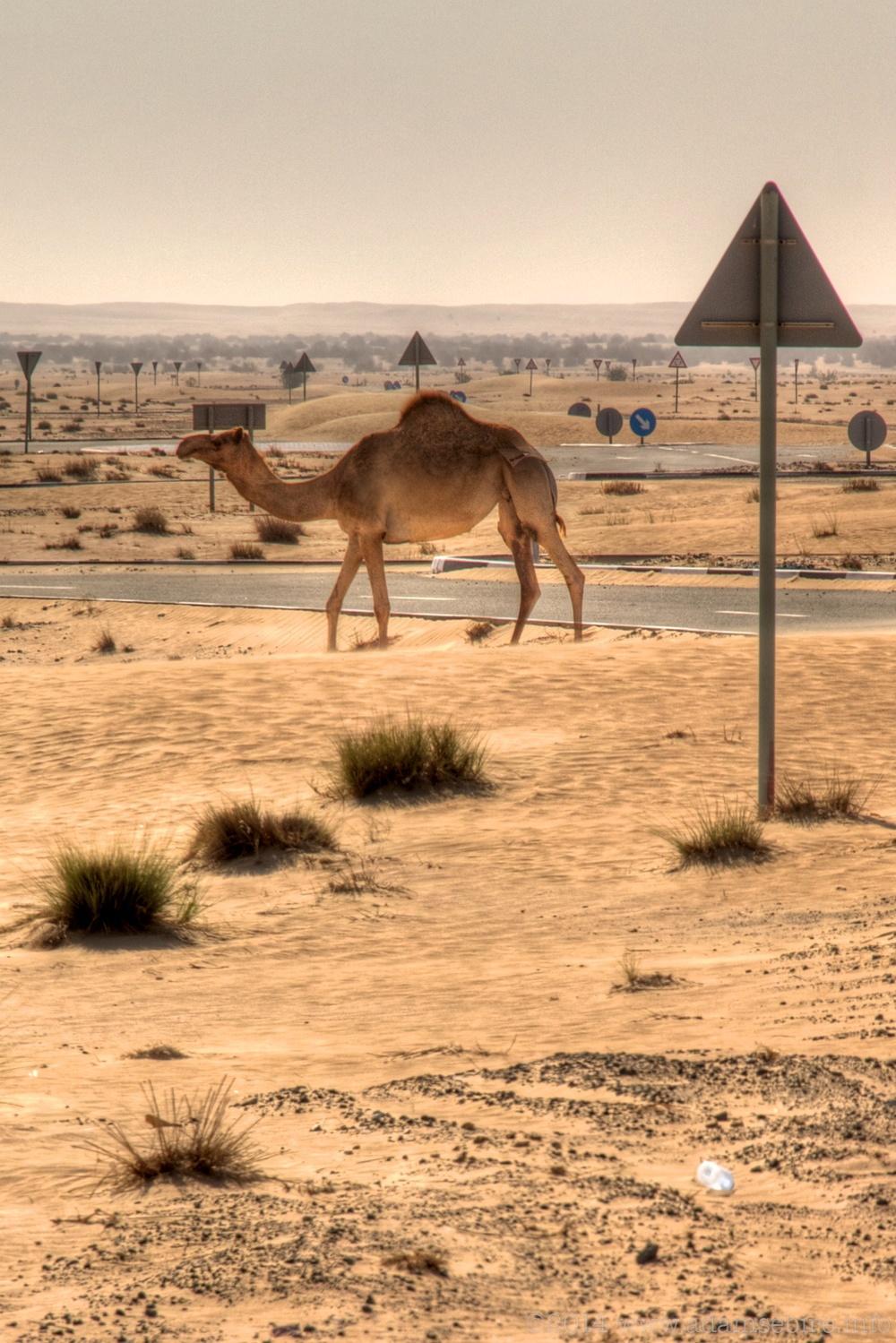 Camel roundabout, Dubai