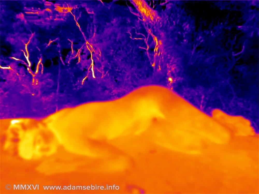 Nude — thermal image art IR001220