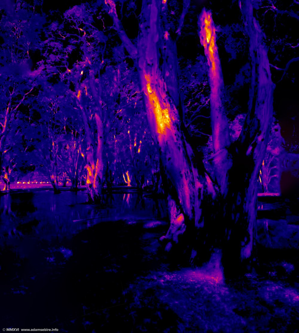Forest (infrared thermal image IR001354-67)