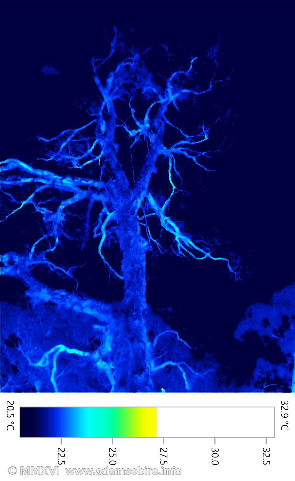Tree by night (thermographic image 001438)