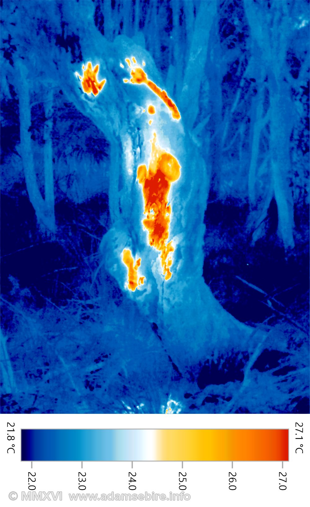 Anthropogenic warming — thermographic photo IR001711