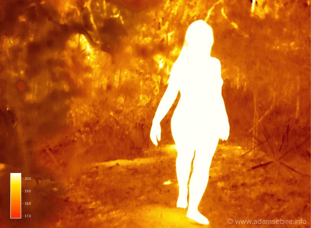 Thermogram IR00260