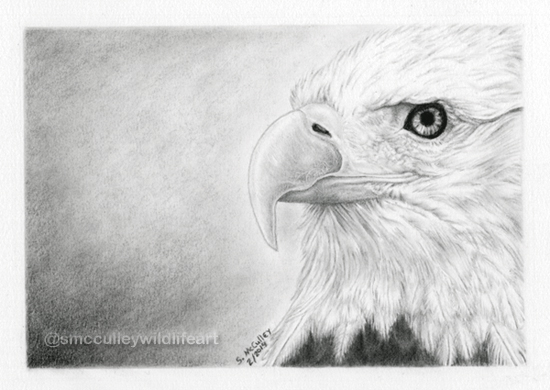 Bald Eagle - close up