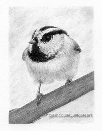 Chickadee for site.jpg