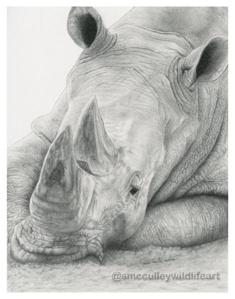 rhino 2013 for site.jpg
