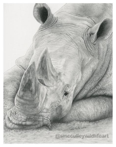 rhino 2013 for site.jpg