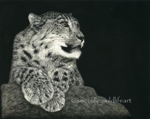 """SNOW LEOPARD""  Scratchboard  Original (framed 16 1/2 x 14 12):  SOLD.    8 x 10"" giclee prints available."