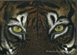 scratchboard tiger.jpg