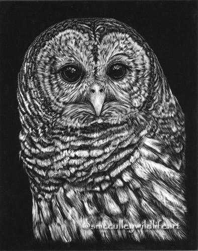 Barred Owl scratchboard.jpg