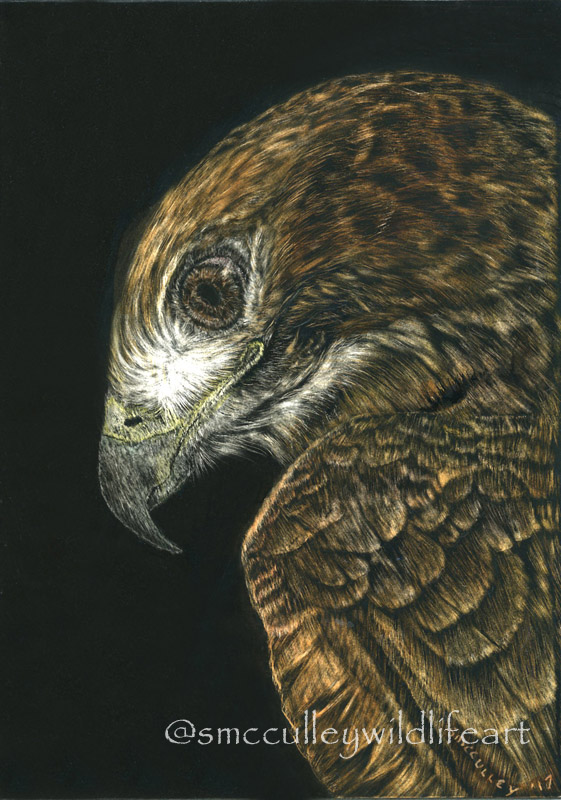 5 x 7 scratchboard colored with inks     Original: SOLD       giclee prints avaible