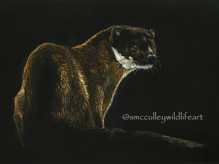 "Pine Marten - 9 x 12 scratchboard colored with inks. Original (framed to 13 x 16"") $425. Giclee prints available March 2019."