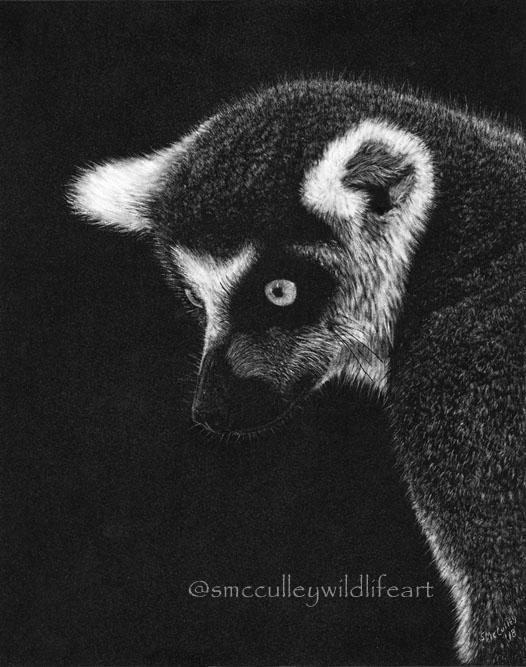 Ring Talied Lemur