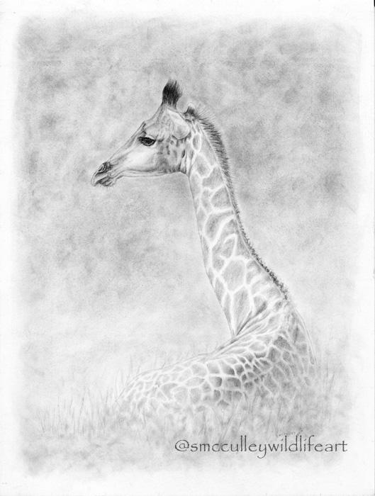 Giraffe paper size 8 x 10 and 11 x 14