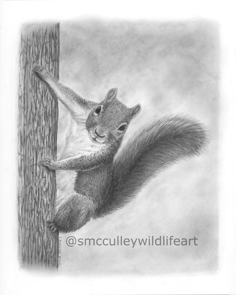 "Squirrel print size 8 x 10"""