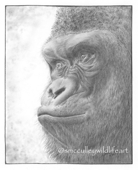 "Gorilla paper size 8 x 10"""