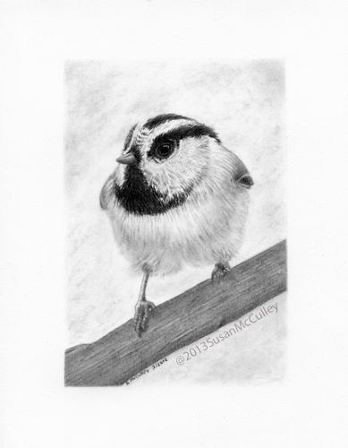 Chickadee image size 5 x 7, paper size 8 x 10