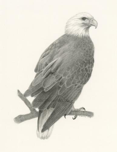 "Bald Eagle print sizes: 8 x 10 and 11 x 14"""