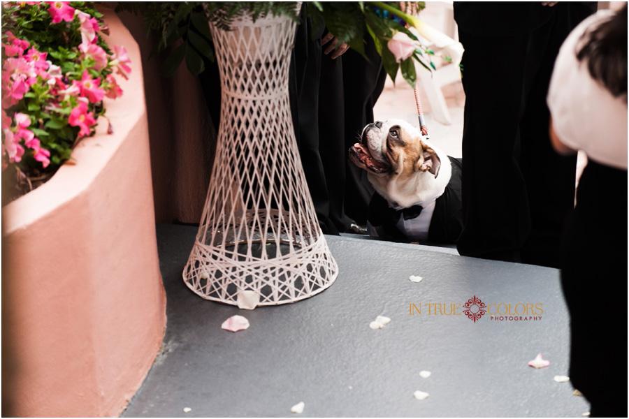 Sarasota Wedding Photographer, Tampa Wedding Photographer