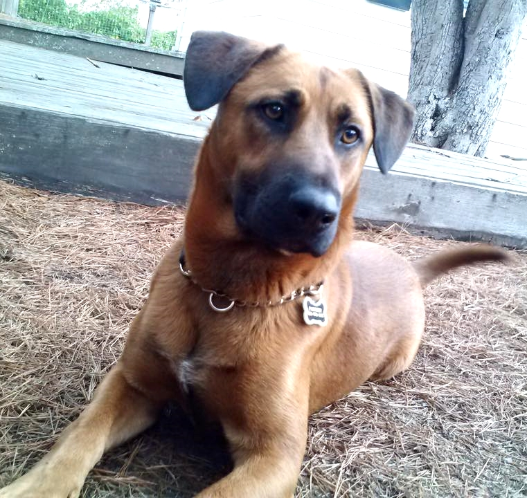 "Remember sweet shy Clifford from Apple Valley shelter, who we rescued in early November 2015? He is now  PARKER  and living a grand life in Northern California. Mom Lori reports ""Parker loves the beach and the snow. He has lots of wonderful energy and is curious and playful. He loves meeting and playing with other dogs of all sizes. He also loves meeting people and he is quick to learn new things. He is no longer timid, and now has lots of confidence and swagger. He also has a little puppy in him still as his front paws flip forward sometimes when he runs. He's quite a character!"""