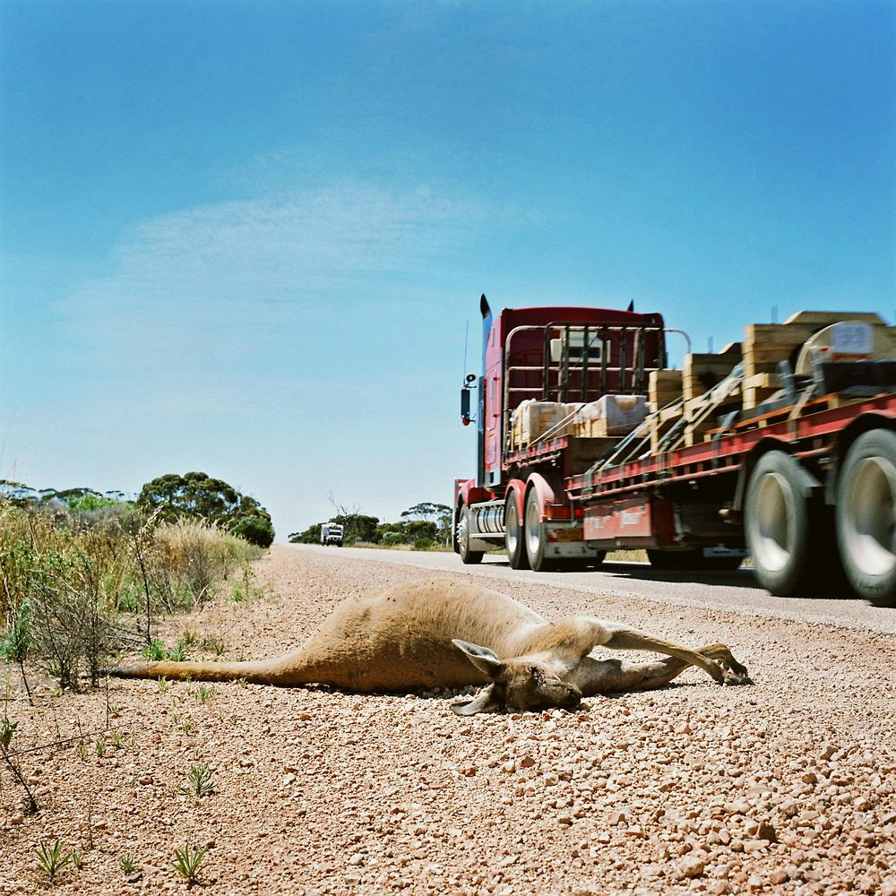 ROAD TRAIN ROAD KILL