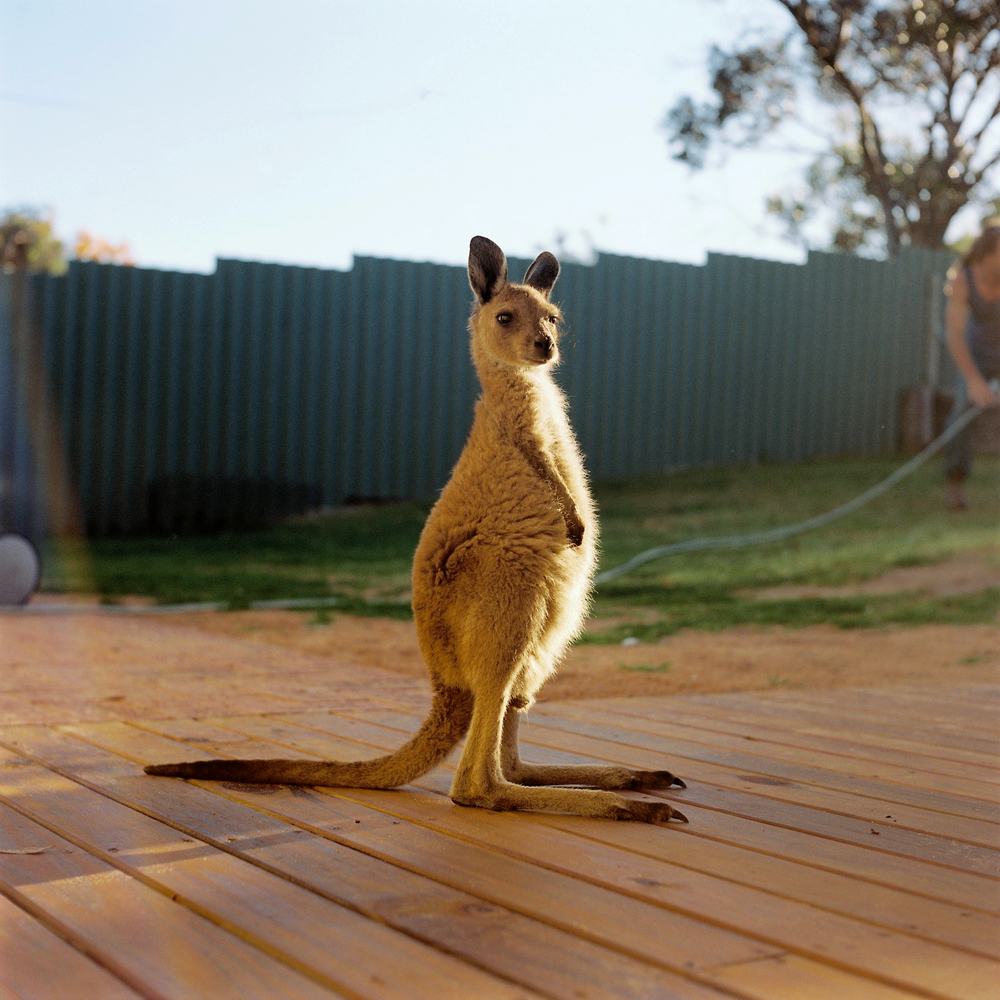 TILLY, THE BABY KANGAROO