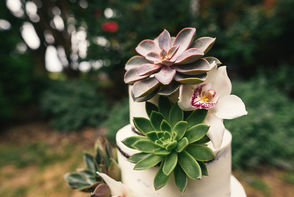 Vineyard Succulent Naked Cake - Sugar Lane Cake Shop