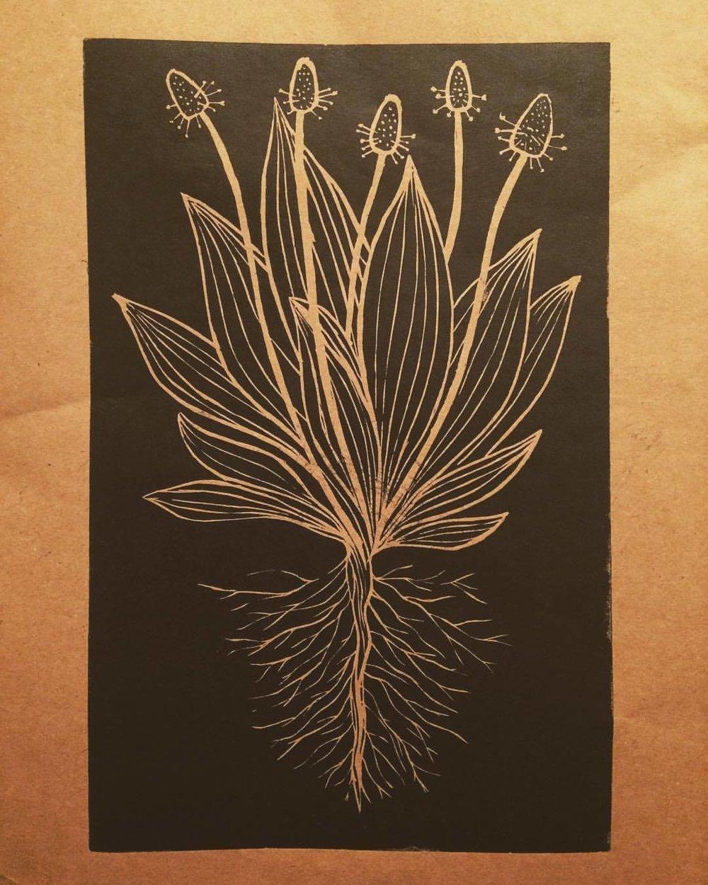 Plantain  (lino)