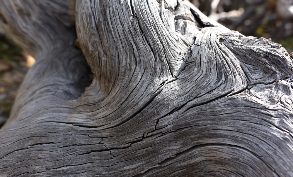Part of a weather worn tree.