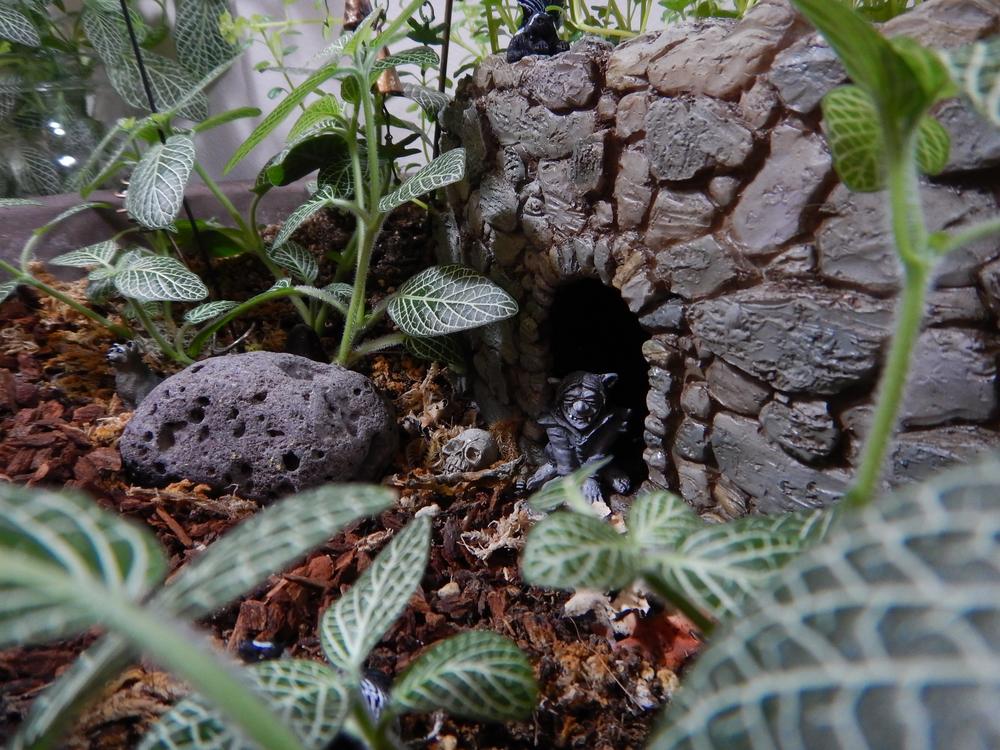 Fairy Garden Sept 2014 - 099.jpg