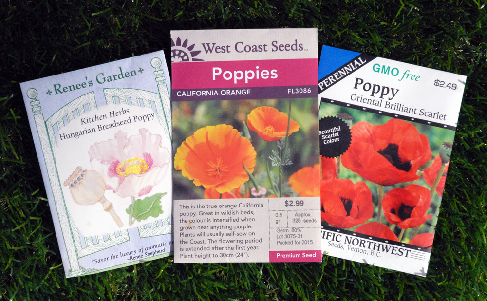 Poppies-Hungarian-breadseed-california-orange-oriental-edmonton