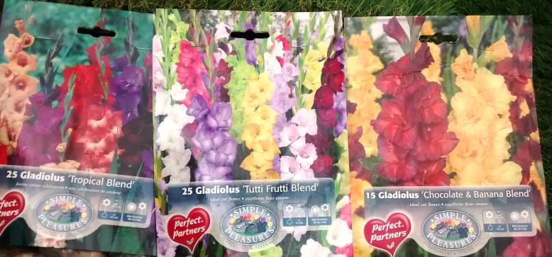 Gladiolus-gladioli-flower-bulbs-stalbert-edmonton-yeg