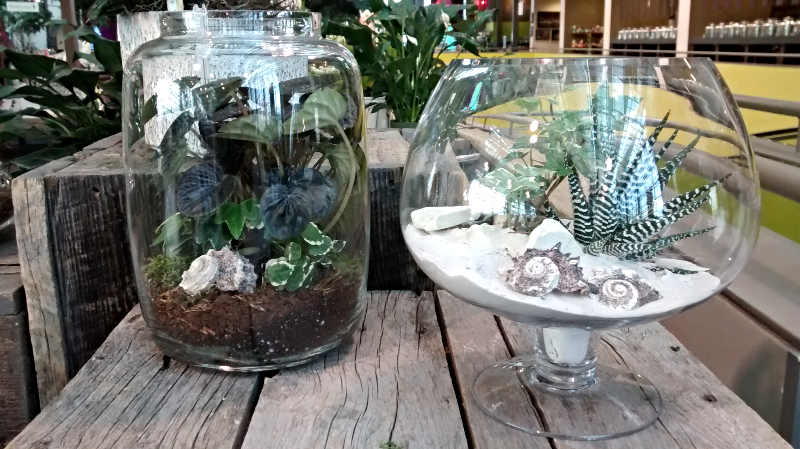 Above, a few of the mini terrarium gardens available in our greenhouse.
