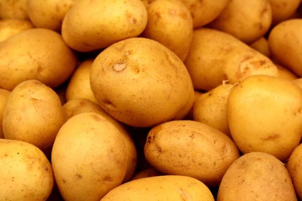 yukon-gold-potato-edmonton-stalbert-yeg-holes