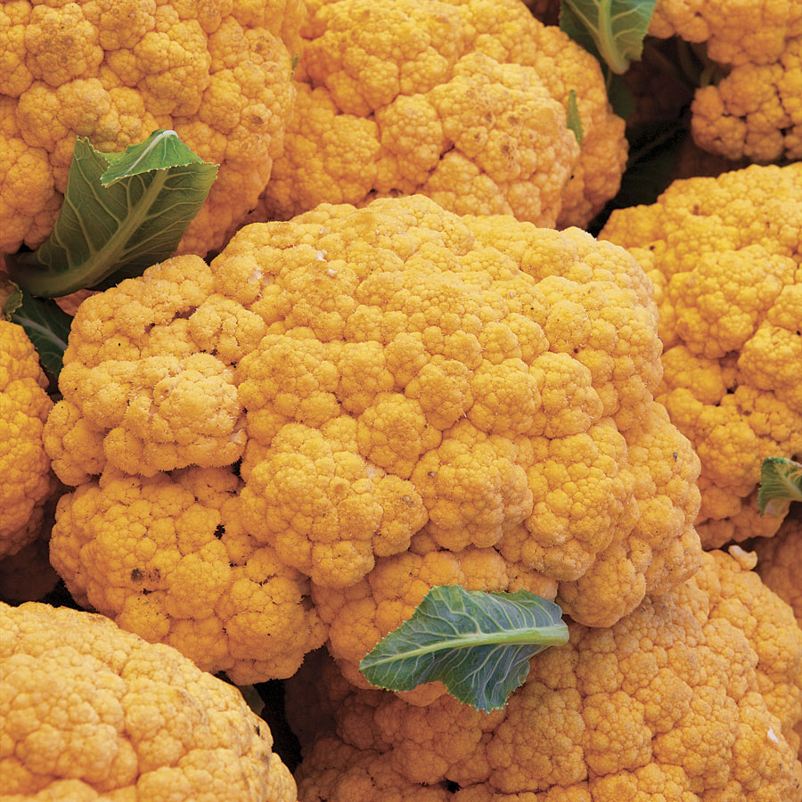cheddar-hybrid-cauliflower-seeds-edmonton-stalbert-holes