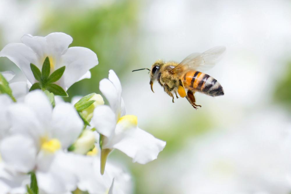 pollinators-flowers-edmonton-stalbert-jim-hole-yeg