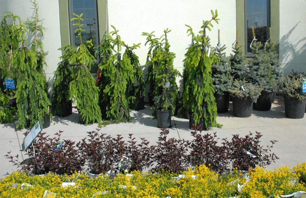 iseli-trees-edmoton-stalbert-holes