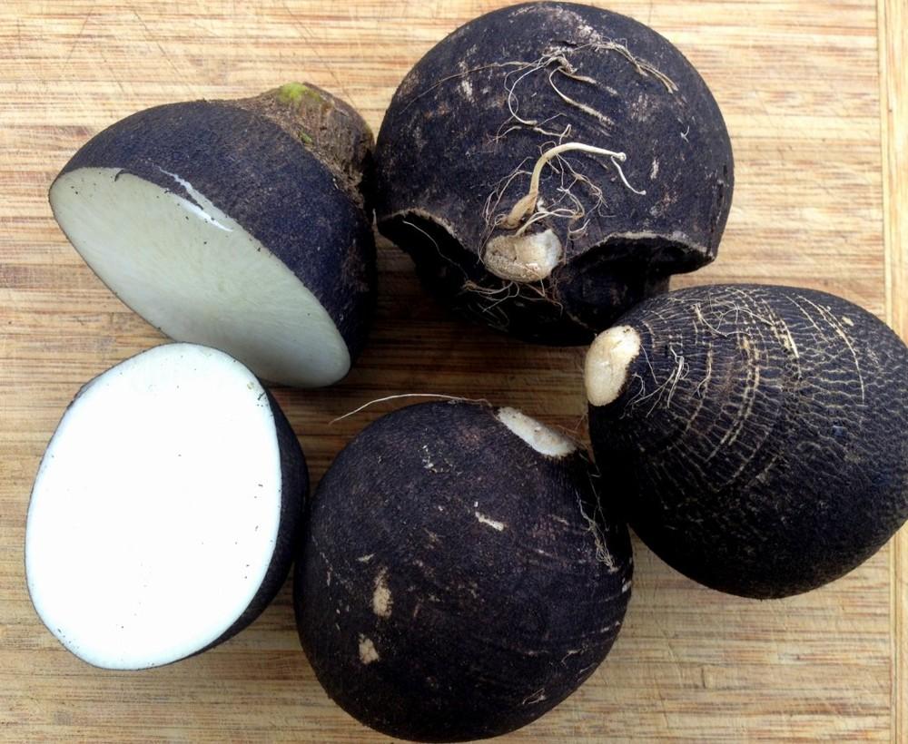 round-black-spanish-radish-seeds-edmonton