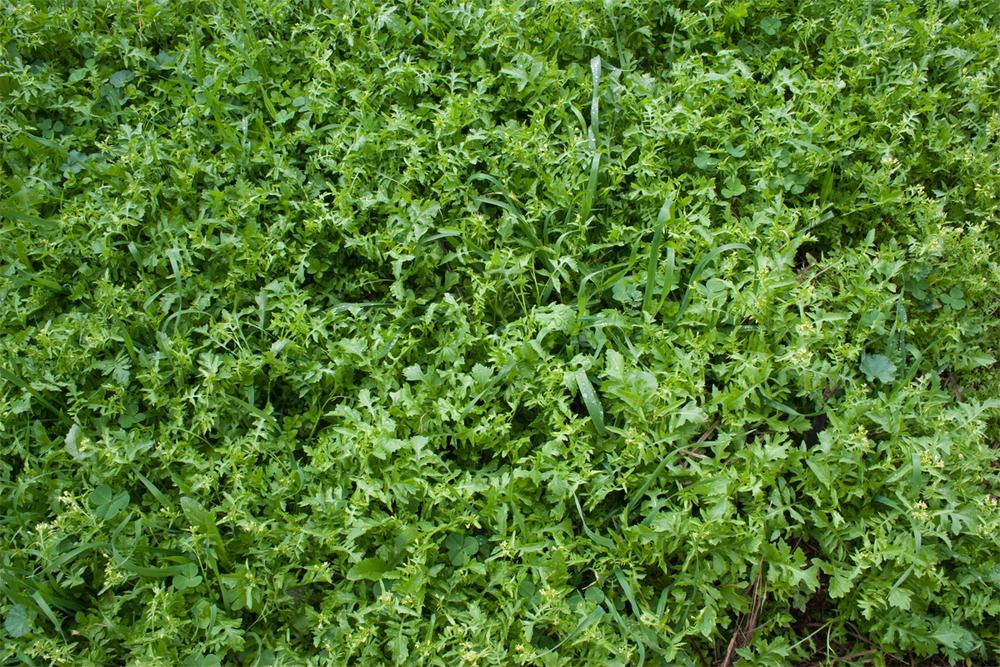 weeds-edmonton-stalbert-yeg-holes