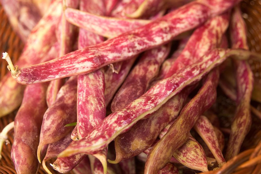 dwarf-horticultural-bean-edmonton-alberta