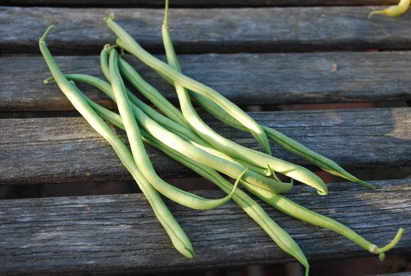 rolande-bean-edmonton-alberta
