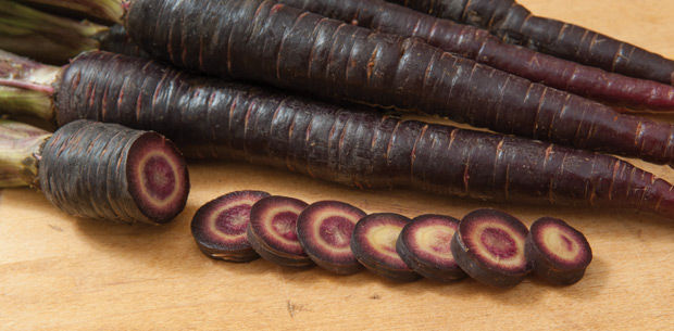 purple-sun-carrot-seeds-alberta