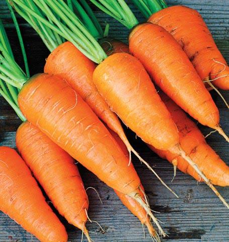 kuroda-nova-carrot-seeds-edmonton-stalbert