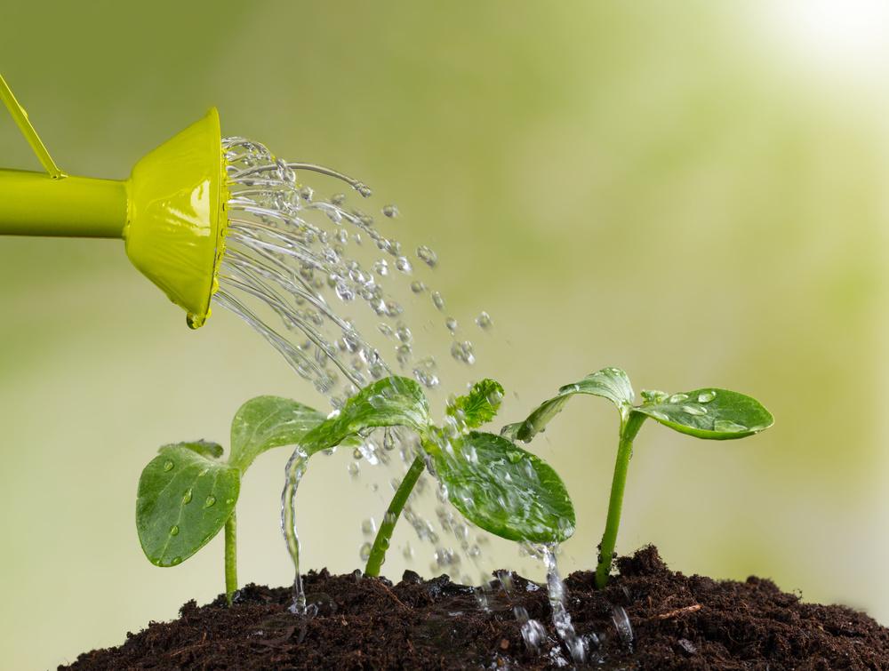 watering-edmonton-stalbert-alberta