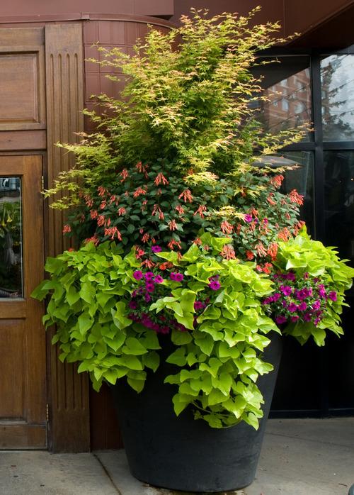 summer+planter.jpg