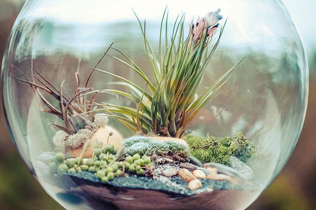 Terrarium_bowl.jpg