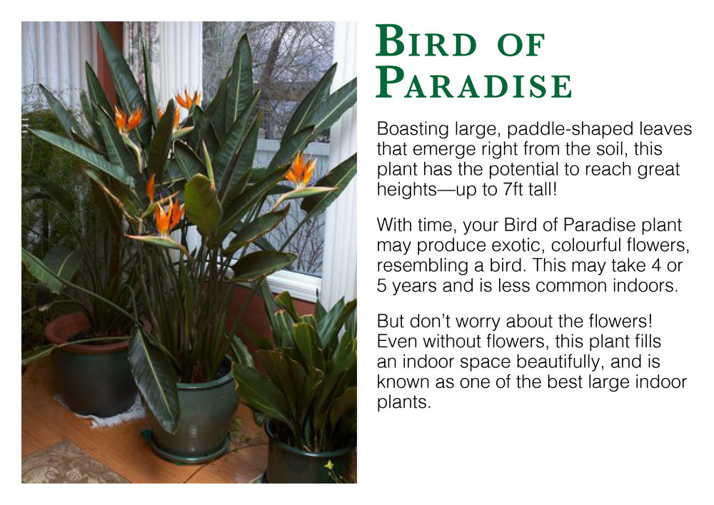 bird of paradise edmonton st albert