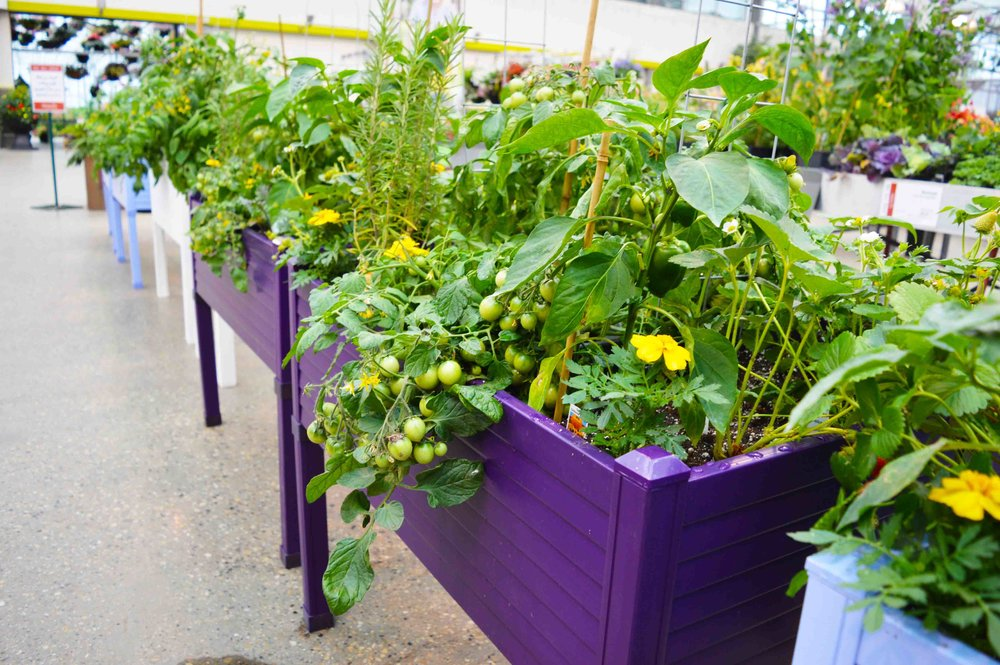may gardening ideas garden container plant flower top tips blog