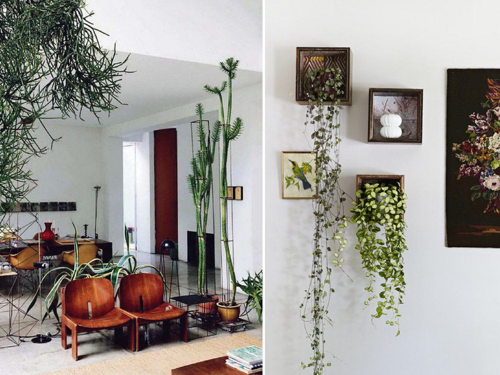 Bon QUIZ: How Much Do You Actually Know About Indoor Plants? U2014 Holeu0027s  Greenhouses